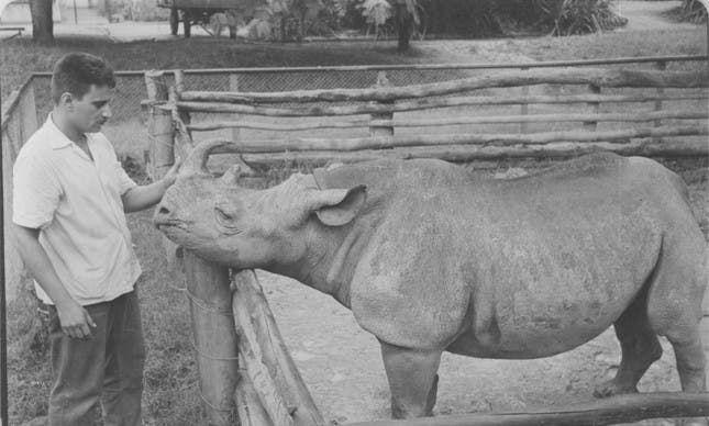 صورة لكاكاريكو التي انتصرت بالإنتخابات عام 1959