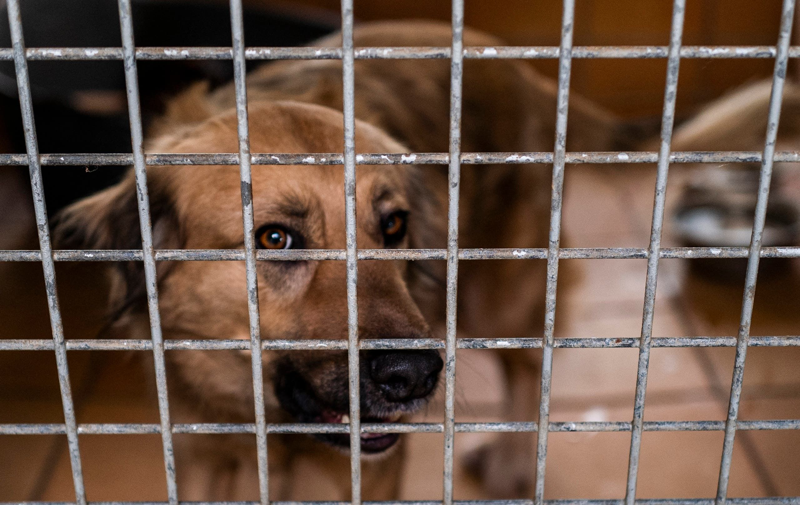 كلب في مأوى للحيوانات في ألمانيا