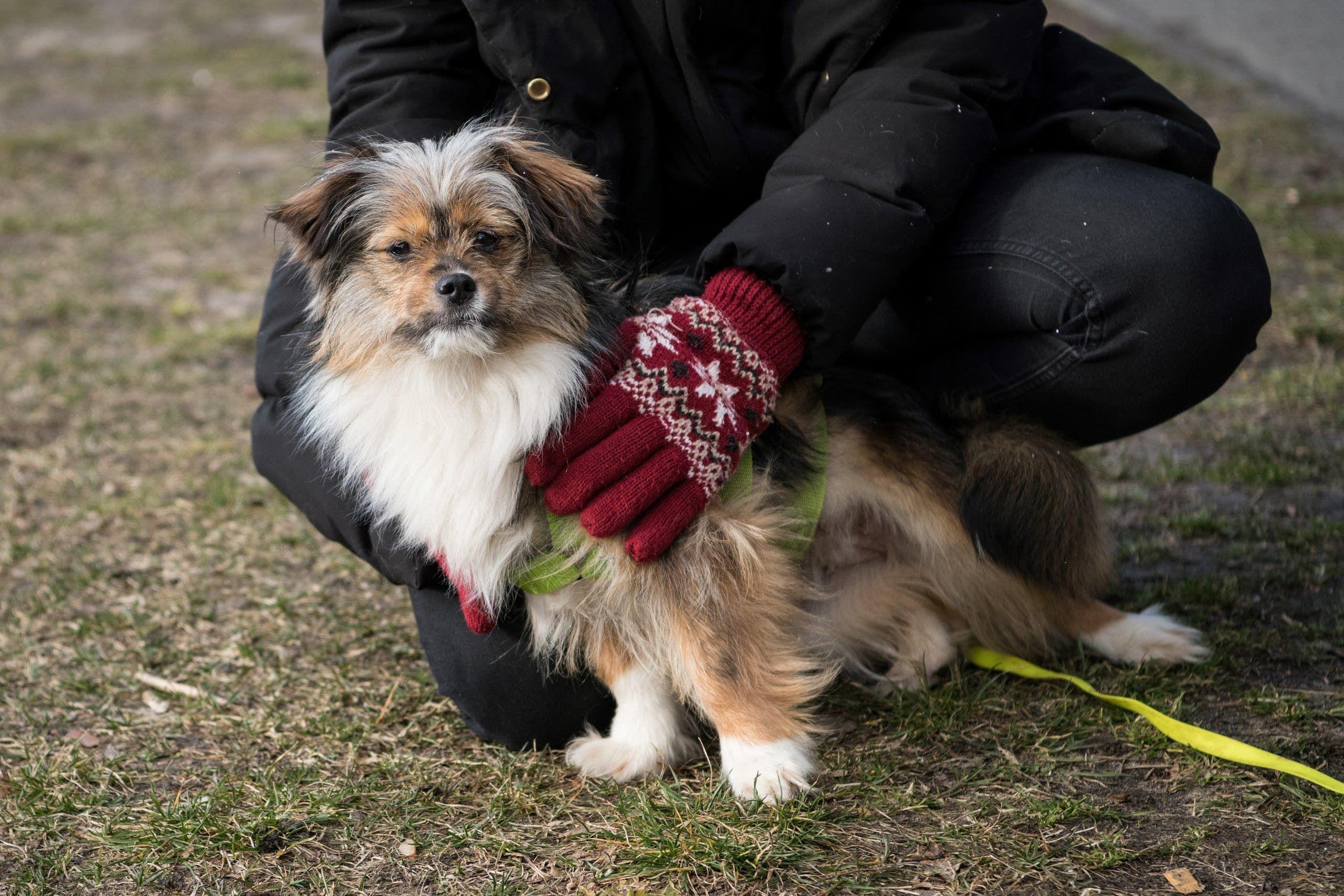 أوشي الكلب الذي تبناه ماركوس سالومون