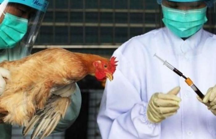 تعرف على أعراض الإصابة بإنفلونزا الطيور ونصائح الوقاية منها