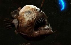 اكتشاف سمكة مخيفة على شاطئ كاليفورنيا