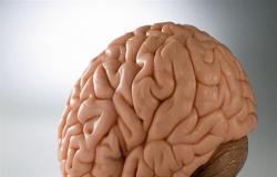 أخطر 9 أطعمة على المخ... من بينها الحلويات
